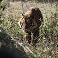 Ranthambore National Park Miyapur  India