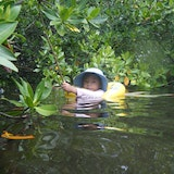 Bimini Mangrove Forests