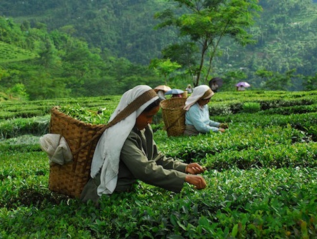 Agritourism Hotels: Glenburn Tea Estate in Darjeeling, India