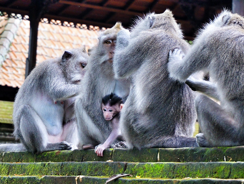 Exploring Monkey Forest in Bali Ubud  Indonesia
