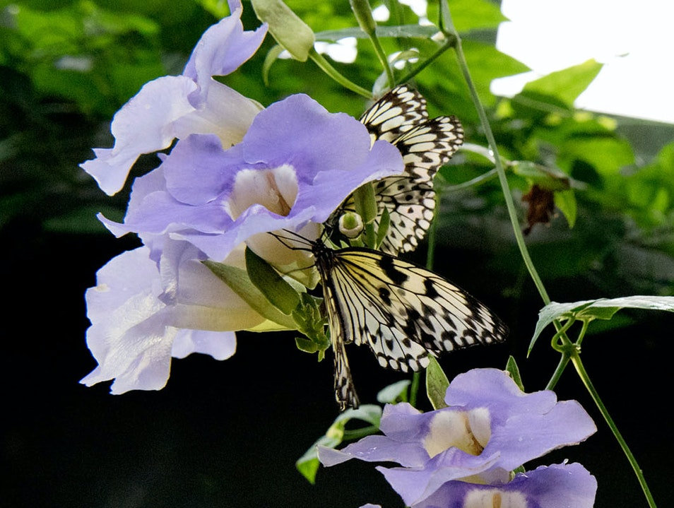 Victoria Butterfly Gardens Brentwood Bay  Canada