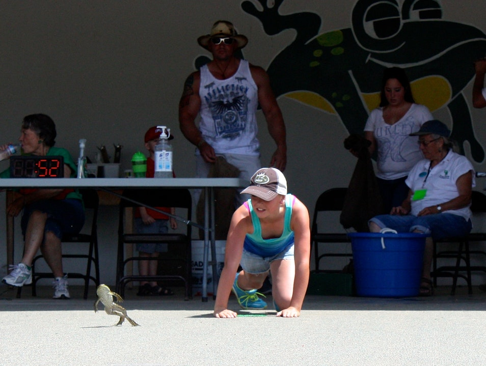 Watch the famous jumping frogs of Calaveras County Angels Camp California United States
