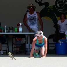 Calaveras County Fair & Jumping Frog Jubilee