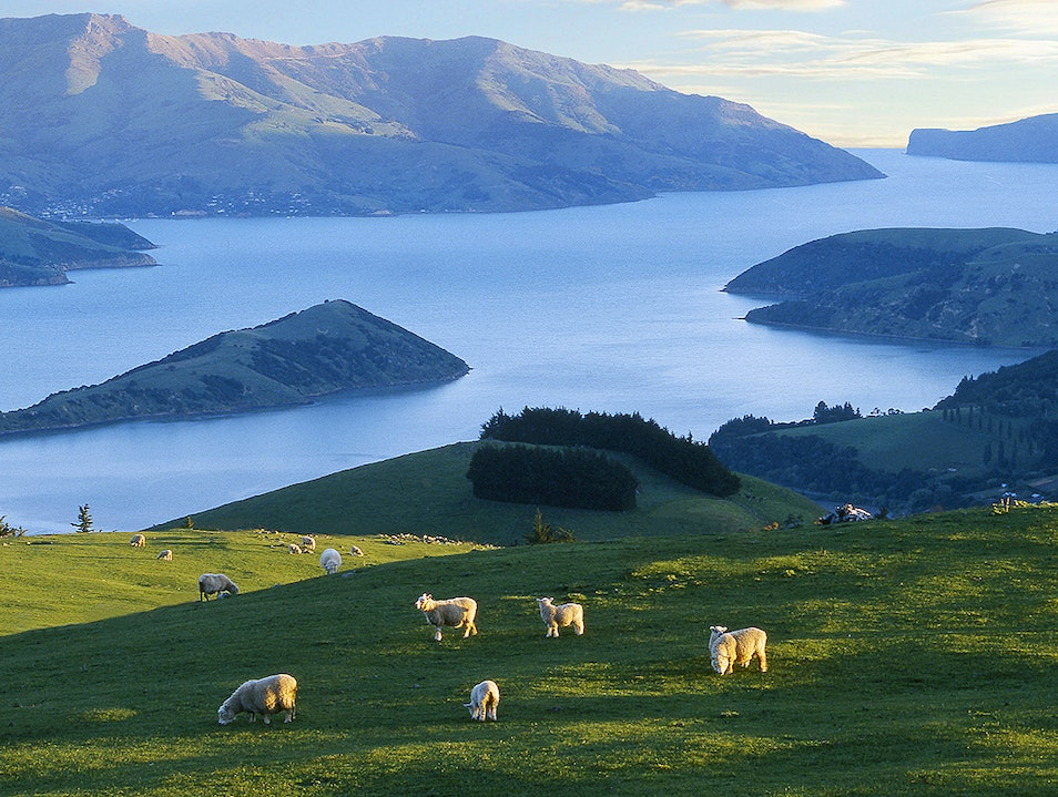 Hill Country Farm Tours Long Bay  New Zealand