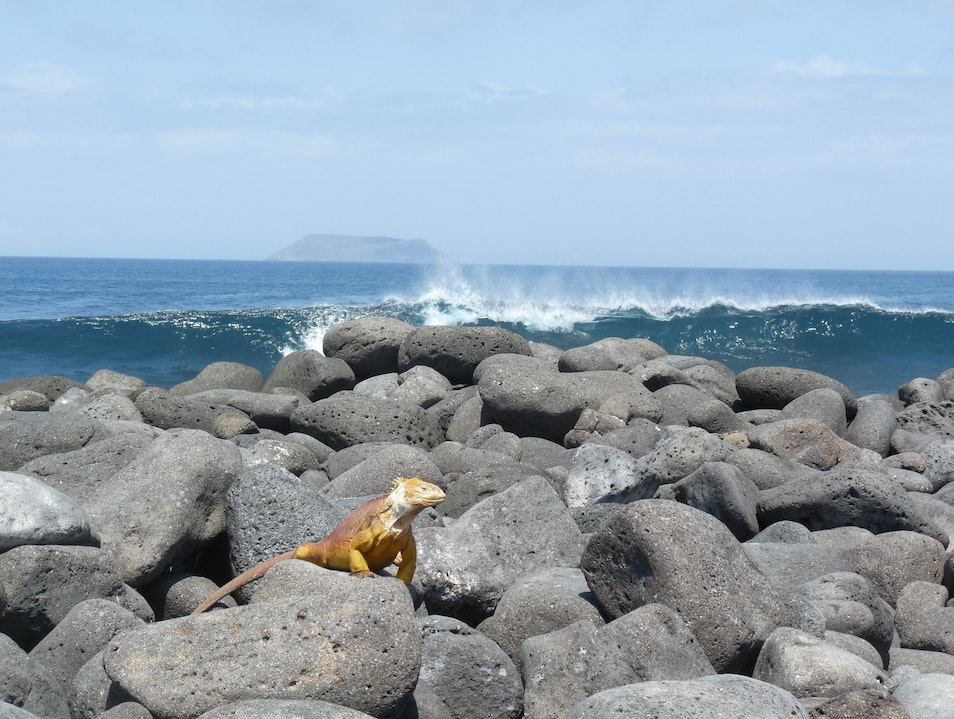 Serenity and Beauty in the Galapagos