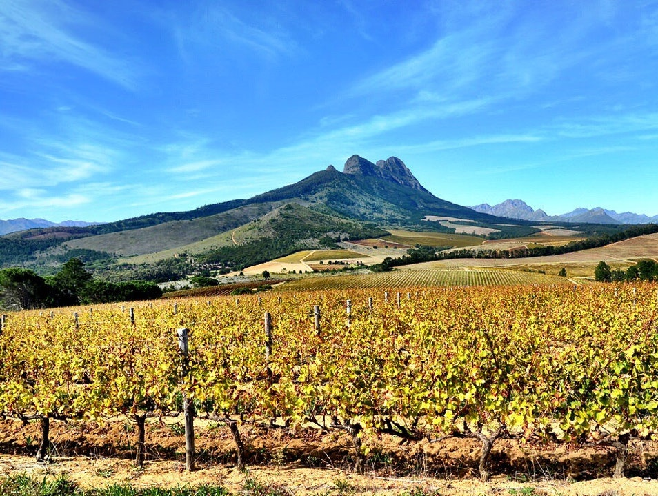 Big Five Wine Safari Stellenbosch  South Africa