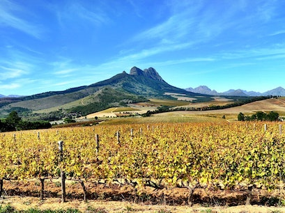 Warwick Wine Estate Stellenbosch  South Africa