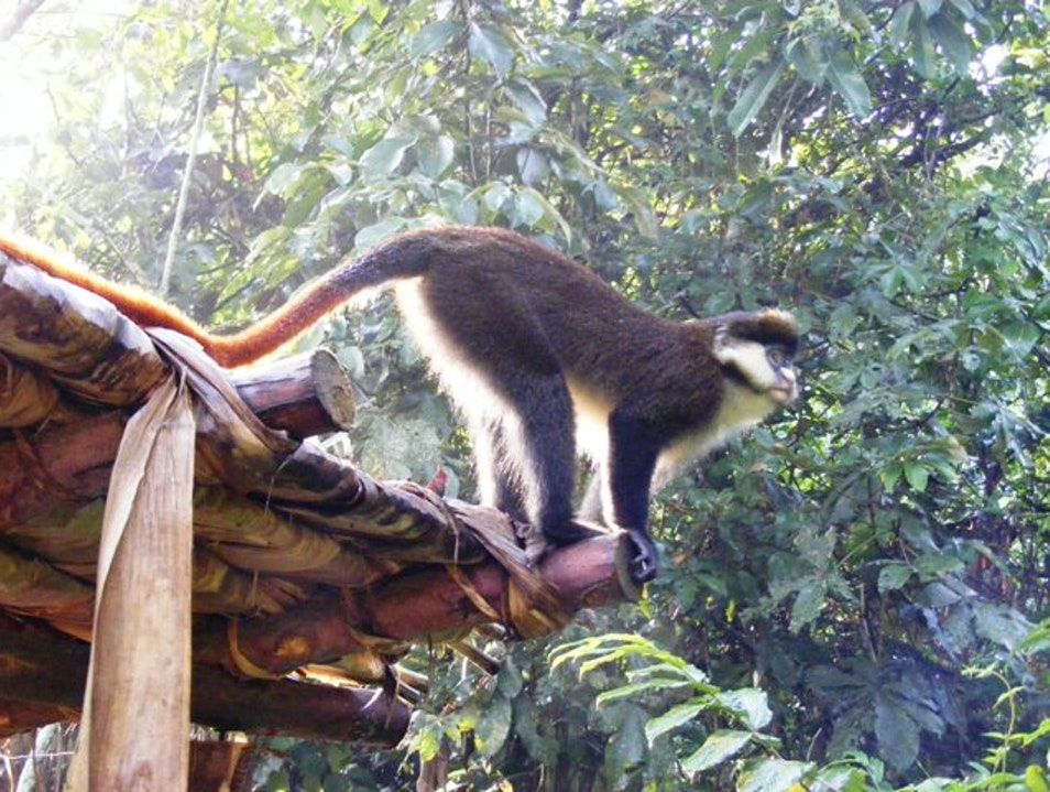 Do you know your totem? Eye to eye with the Red tailed Monkeys