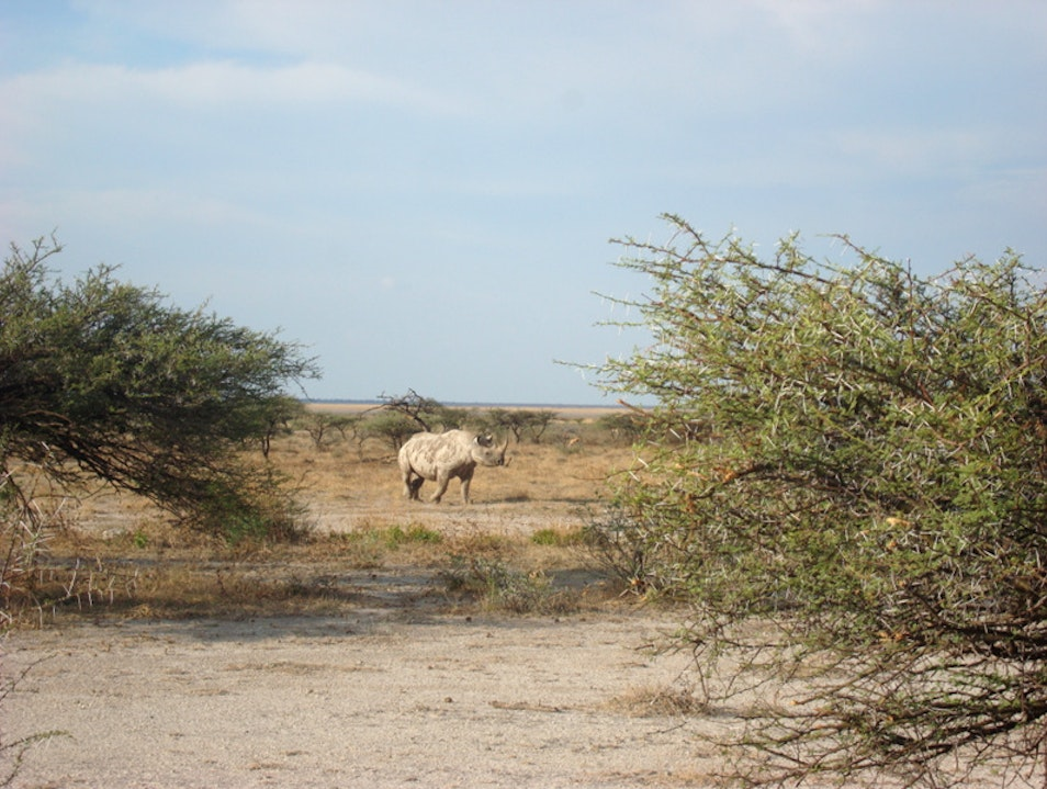 Observing Rhino at Ongava Game Reserve