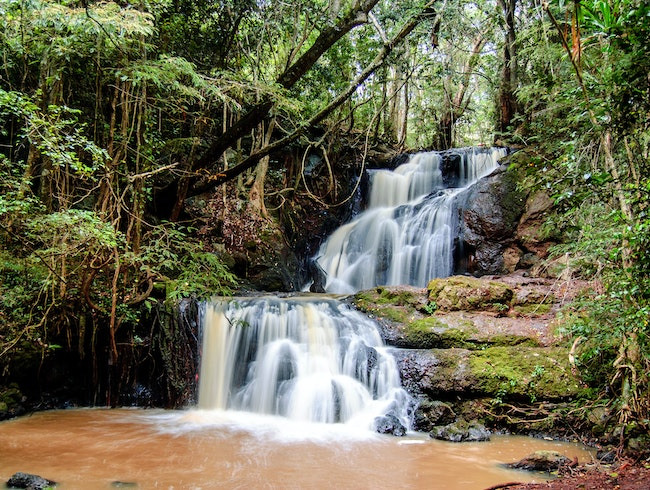 Take a stroll through Nairobi's Karura Forest