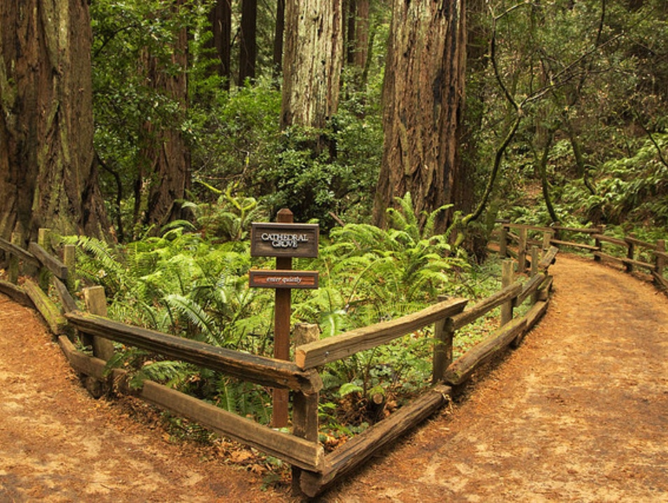 Hiking in Muir Woods Mill Valley California United States