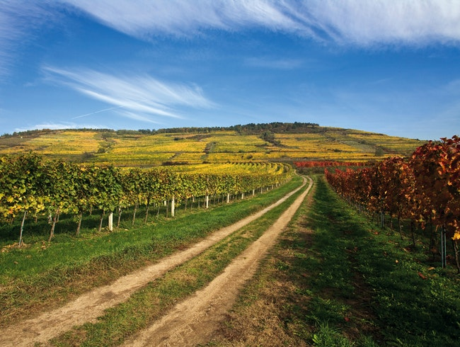 Explore the Kamptal Wine Route in Lower Austria