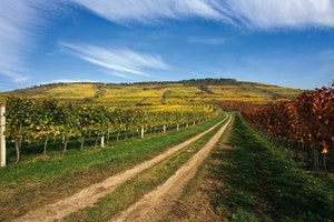 Austria's Must-Visit Wine Regions