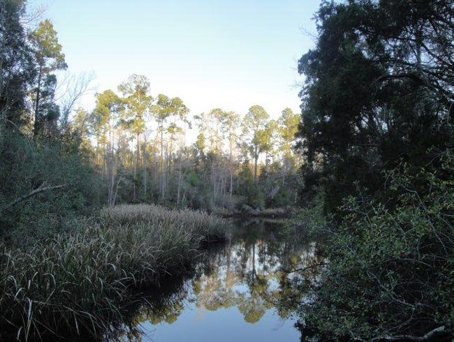 Hiking at the University of West Florida