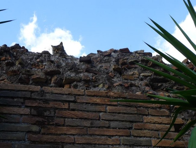 Roman ruins with lots of cats