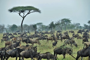 The New Serengeti: Safaris for 2016