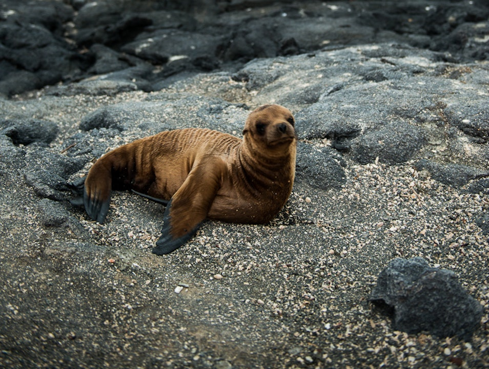 Charm a Baby Sea Lion Galápagos Islands  Ecuador