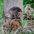 Monkey Forest Trentham  United Kingdom