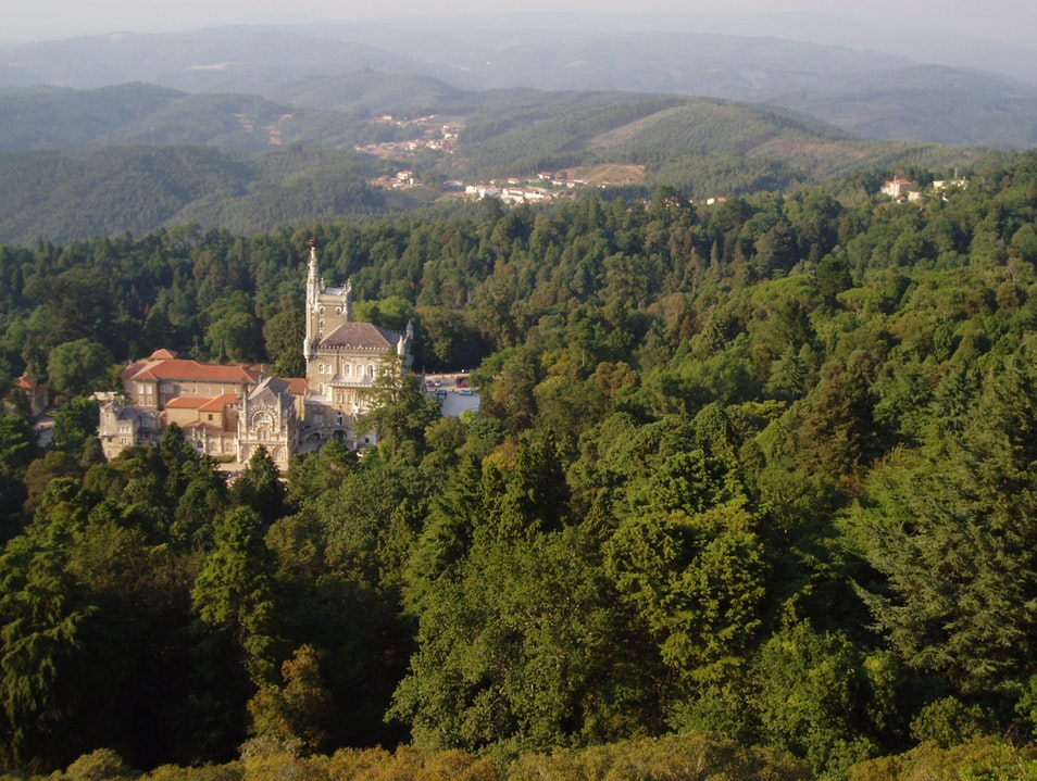 Bussaco National Forest