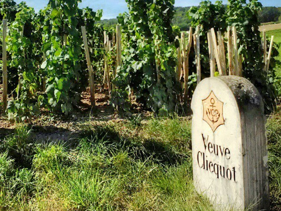 Champagne tasting in Champagne  Reims  France