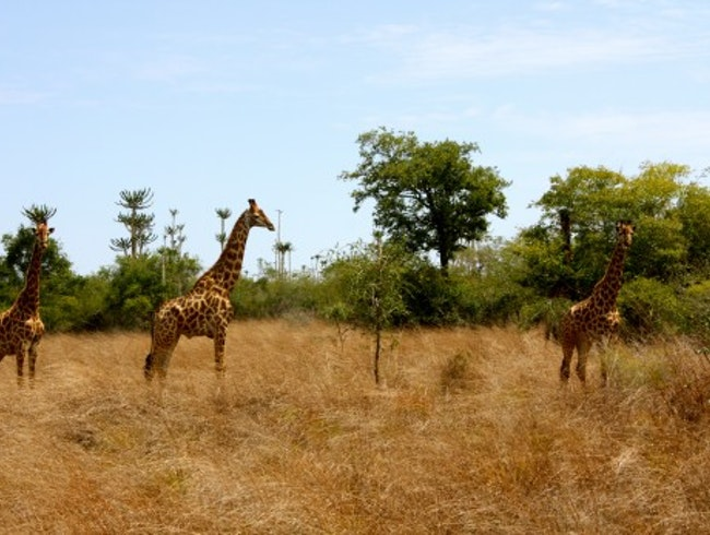 The Virtually Unknown National Park in Angola - Kissama