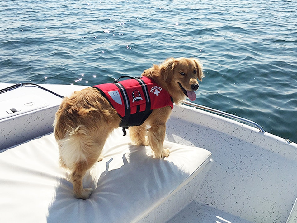 Boating with Your Dog Kennebunkport Maine United States