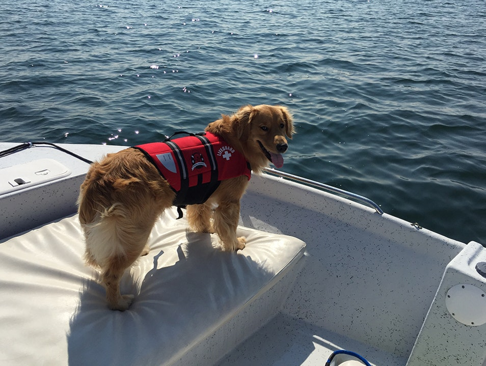 Boating with Your Dog