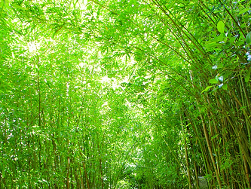 The Bamboo Forest, Maui – USA Kula Hawaii United States