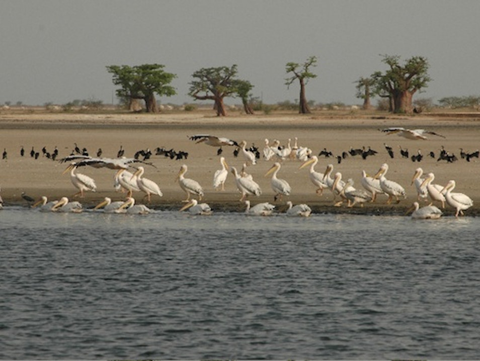 The Sine-Saloum Delta, West Africa Foundiougne  Senegal