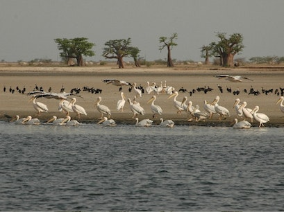 Parc national du delta du Saloum Foundiougne  Senegal