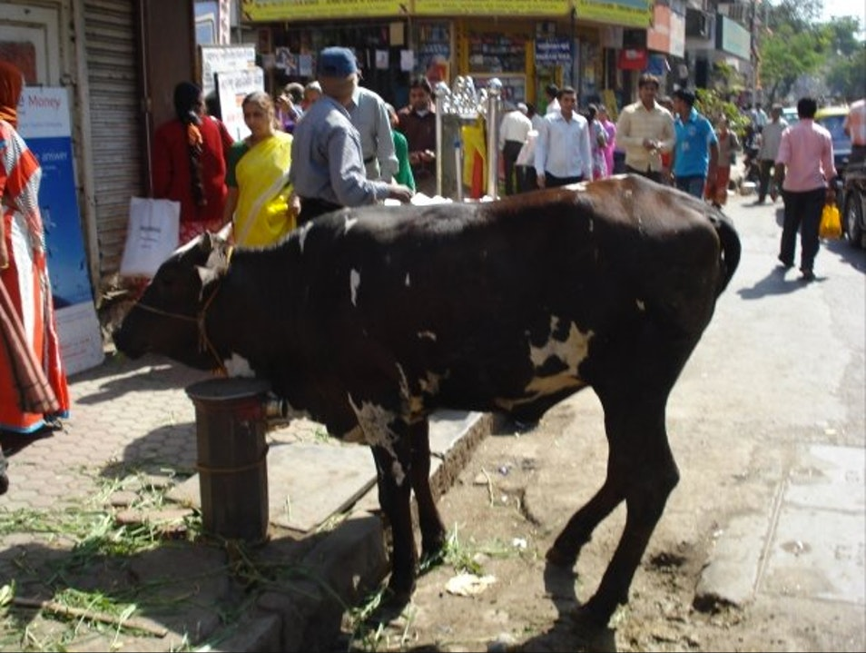 Holy Cow Mumbai  India