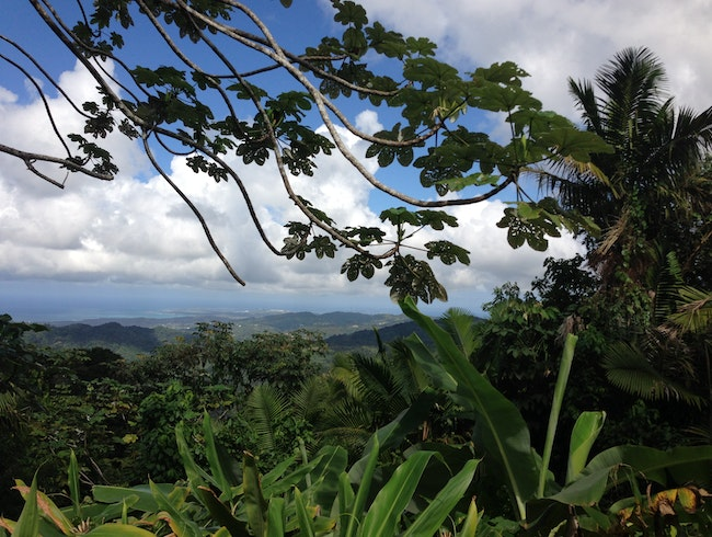 Hiking to Spectacular Views in El Yunque