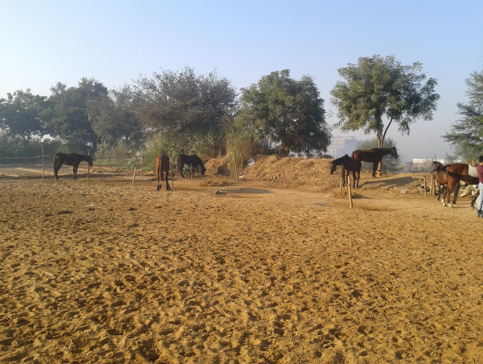 Ride Horses with Janak Gurgaon  India