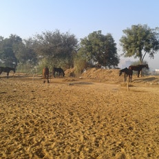 Janak Horse Riding Club