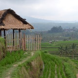 Unesco Rice Fields, Bali, Indonesia