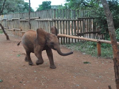 David Sheldrick Wildlife Trust Nairobi  Kenya