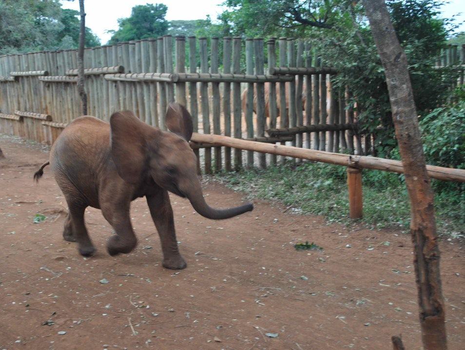 David Sheldrick Wildlife Trust Nairobi Afar