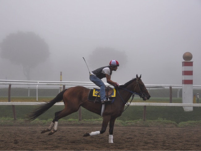 Morning Fog at Saratoga