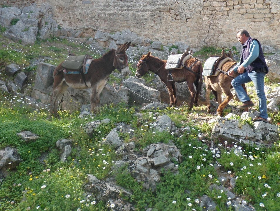 Donkey'ing It Up to the Acropolis of Lindos Lindos  Greece