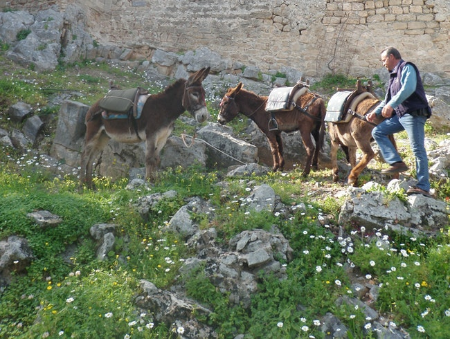 Donkey'ing It Up to the Acropolis of Lindos