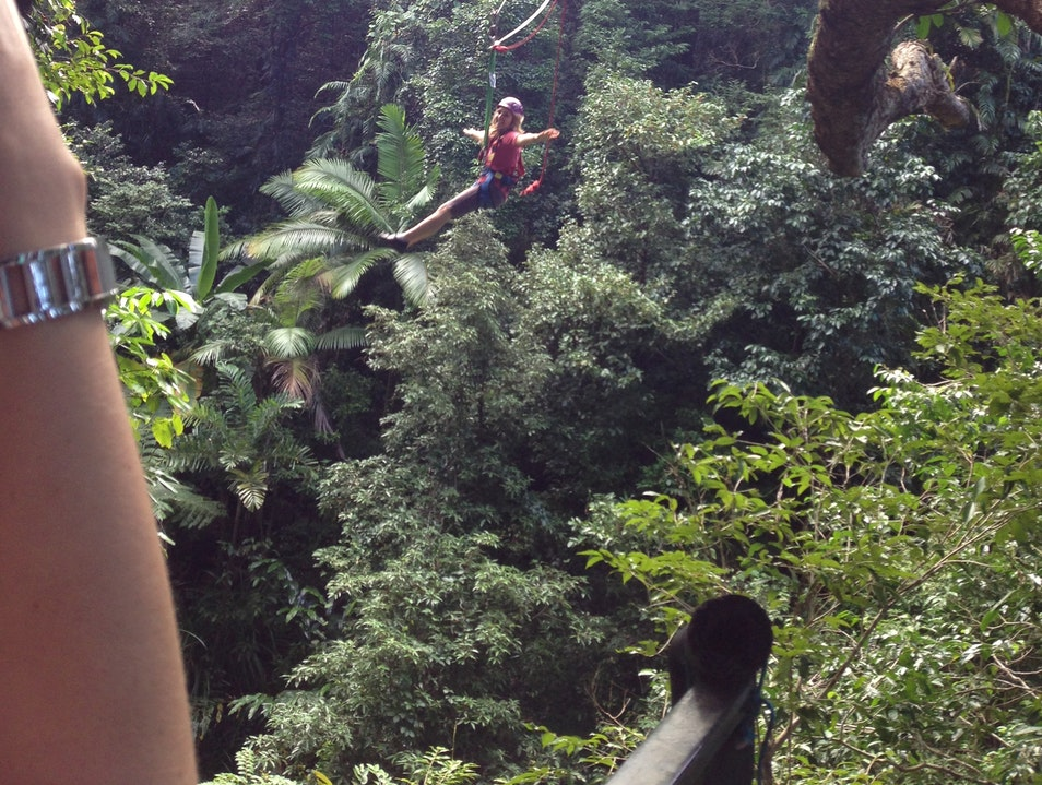 Jungle Surfing: Not for the Heights-Averse! Cape Tribulation  Australia