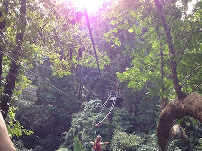 Jungle Surfing Canopy Tours and Jungle Adventures Nightwalks Cape Tribulation  Australia