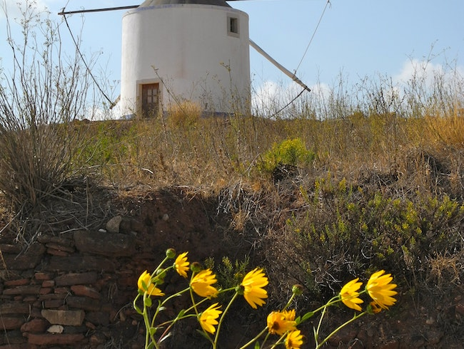 Windmill on a Hilltop Over Field and Flowers