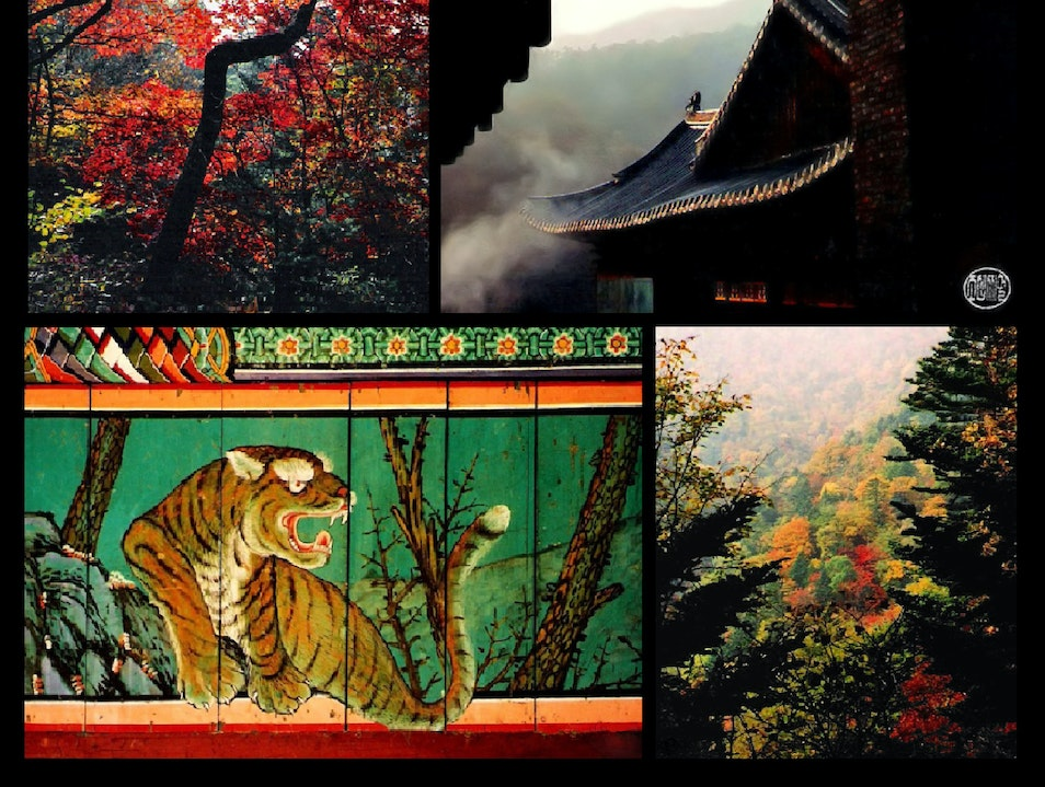 vibrant morning palette--autumn in the mountains of Pyeongchang