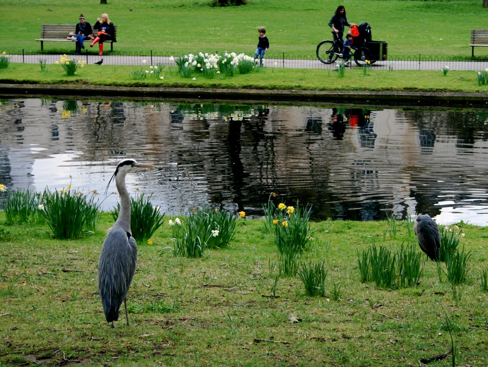 Birding in London London  United Kingdom