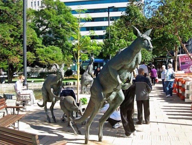 The Kangaroos Of Downtown Perth