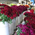 San Diego International Floral Trade Cn Carlsbad California United States