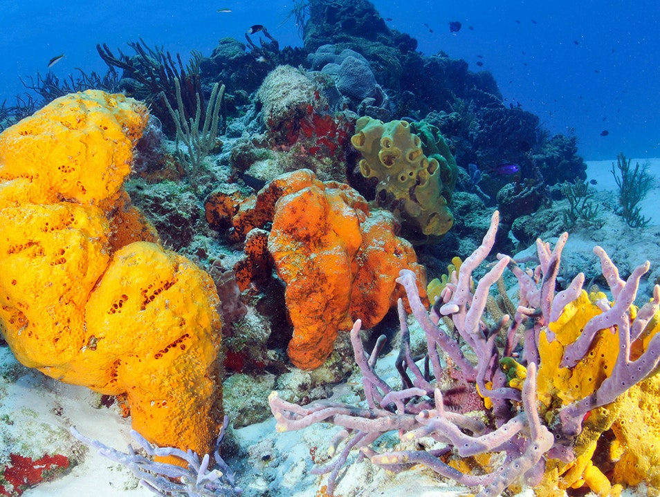 Glass-Bottom-Boat and Snorkel Trip
