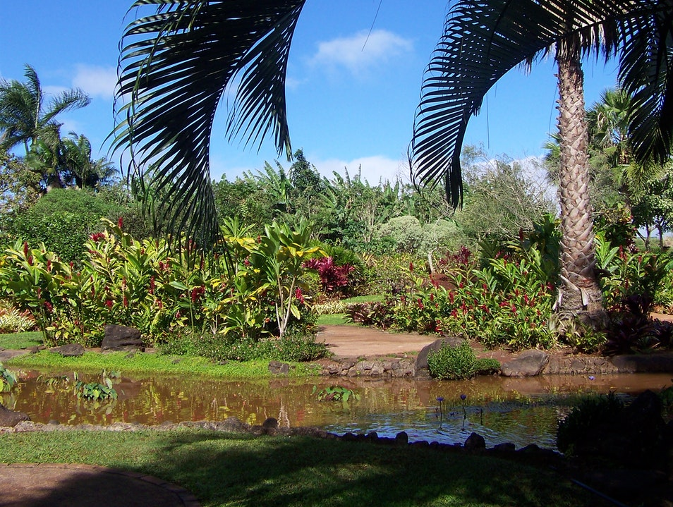 Touristy pineapple plantation offers hidden gem with its gardens Wahiawa Hawaii United States