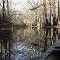 Congaree National Park Arcadia Lakes South Carolina United States